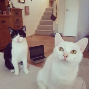 Week 12 -Mr Brook's Cats